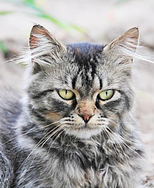 cat-1881653_1920